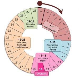 Cyclus vruchtbare dagen-ovulatie berekenen